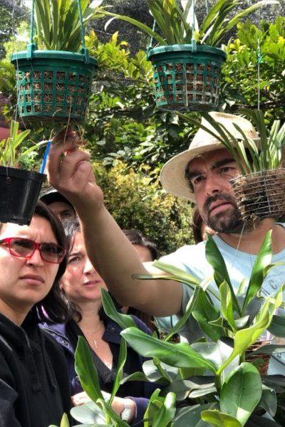 planes-en-bogota-orquideas-jardineria
